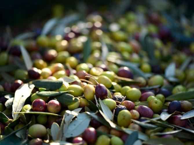 Olive e capperi