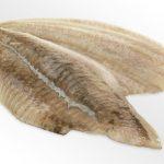 Filetto di Passera senza Pelle IQF (busta da 1 kg)